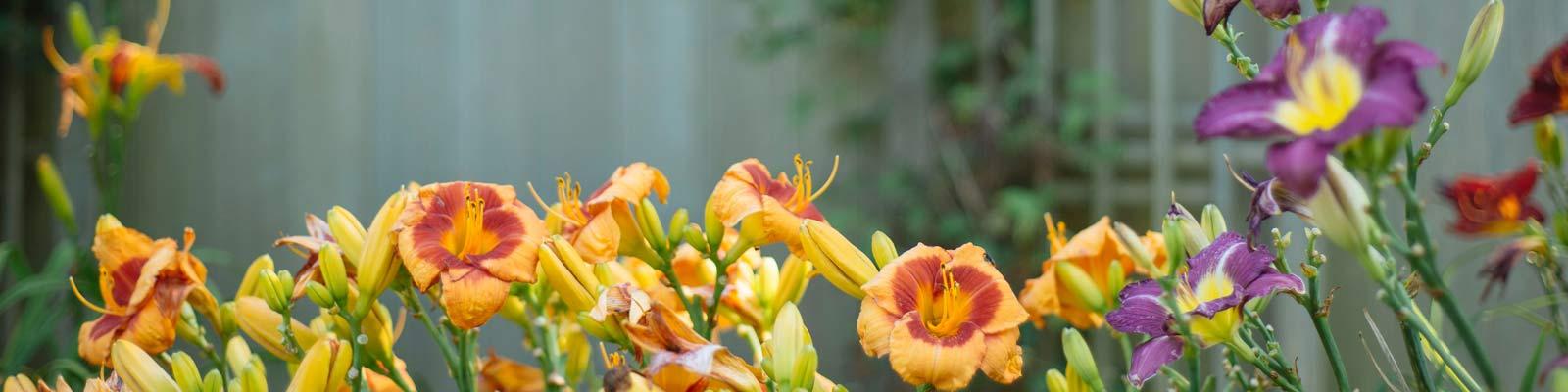 Bygårder med blomsterbedder